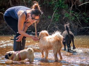 How to find a good dog walker?