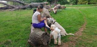 qualified-and-insured-dog-walker-in-aldershot