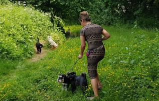 puppy-care-aldershot-farnborough-in-hampshire
