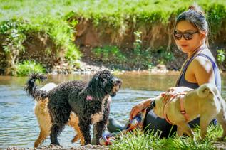 doggy-daycare-near-me