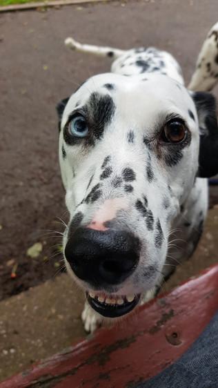 aldershot-and-farnham-dog-kennel-boarding