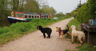 the-dog-walker-with-dog-group-walking