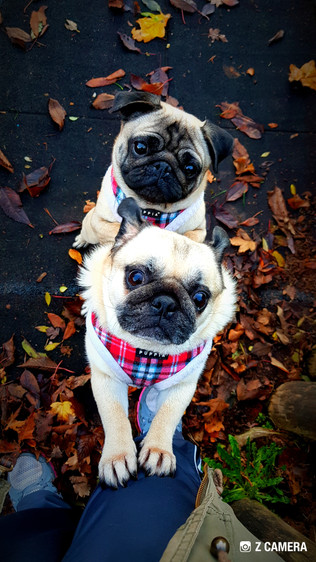 dog-baby-sitter-aldershot-hampshire