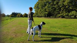 dog-walker-fleet-and-camberley