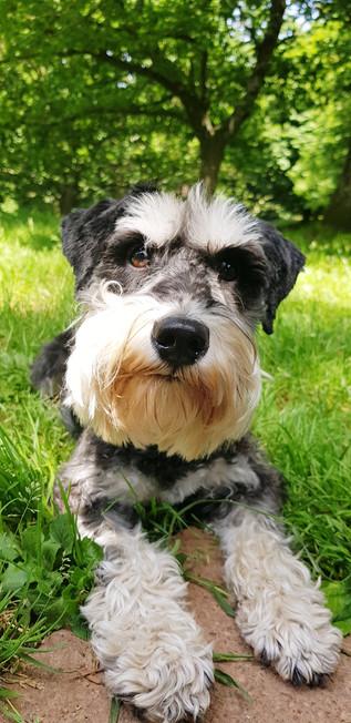 puppy-school-enjoying-farnham-walks
