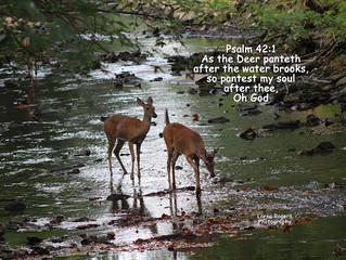Longs - Psalm 42