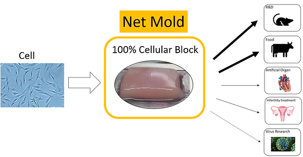 Net Mold Application.png
