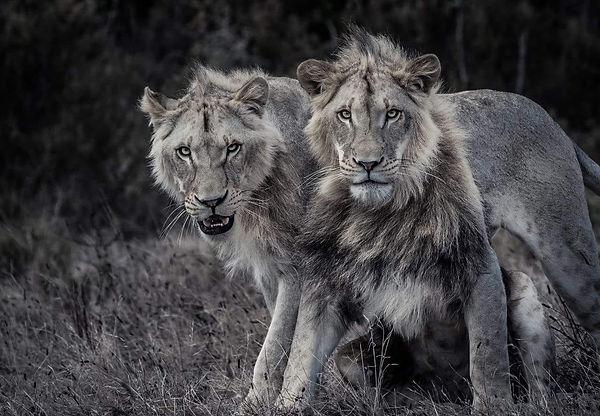 brothers (2020_03_14 18_15_26 UTC).jpg