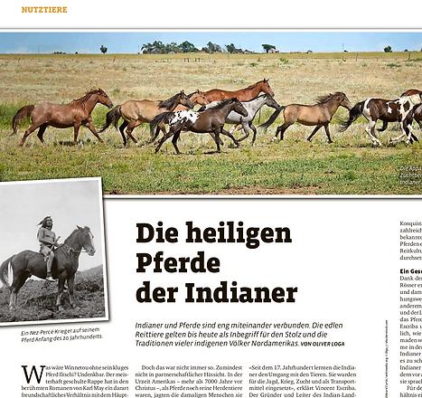 Tierwelt_Nutztiere_Pferd.png