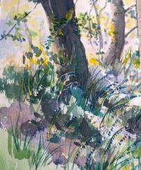 Tree Trunks - Watercolour