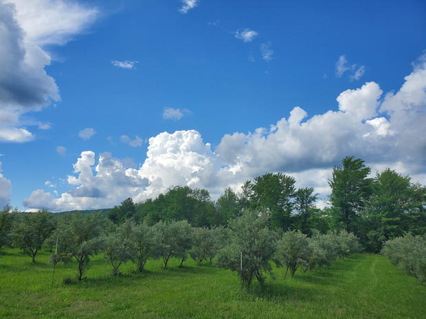 Plantation Argousiers 2020