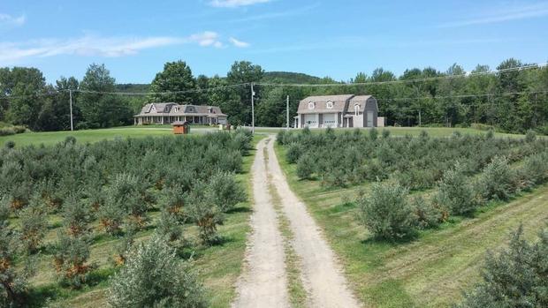 Plantation Argousier 2019
