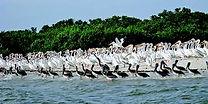 birds on island.jfif