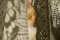 Il est difficile d'attraper un chat noir dans une pièce sombre, surtout lorsqu'il n'y est pas.  - Proverbe chinois