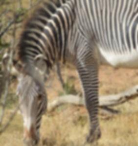 Kenya Quest Expedition.jpg
