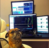 What can dogs teach me about options traders?