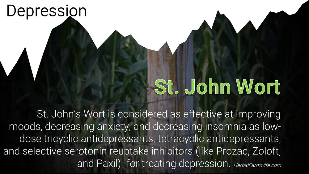 St John Wort for Depression HerbalFarmwife.com