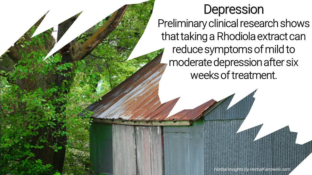 Depression Rhodiola Herbalfarmwife.com