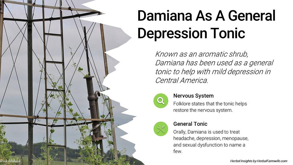 Damiana As A General Depression Tonic HerbalFarmwife.com