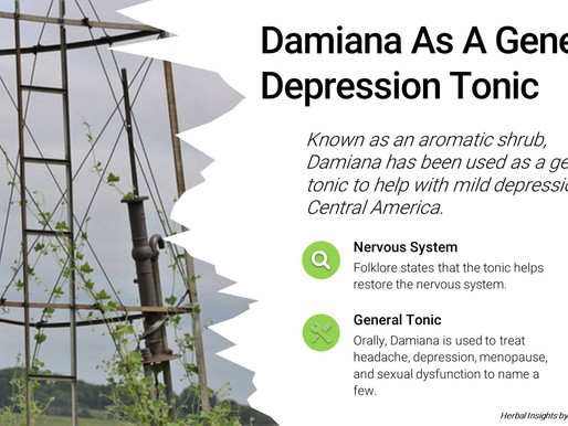 Damiana As A General Depression Tonic