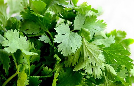 Do You Have A Urinary Tract Infection? Cilantro To The Rescue.