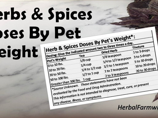 So How Much Of A Herb or Spice Can I Give My Pet?
