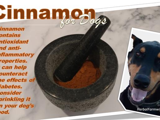 Cinnamon for Dogs!
