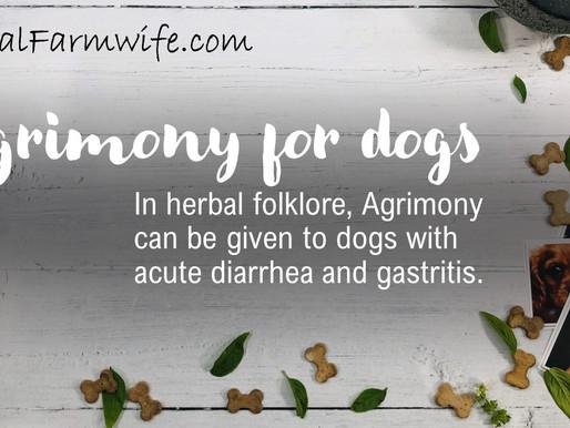 Doggie Diarrhea?