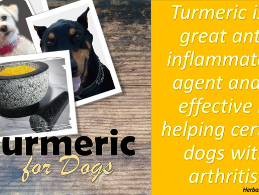 Is Your Pet Dealing With Arthritis? Needing An Anti-Inflammatory?