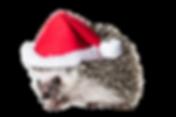 santa hat_edited_edited.png