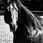 Percy - black and white