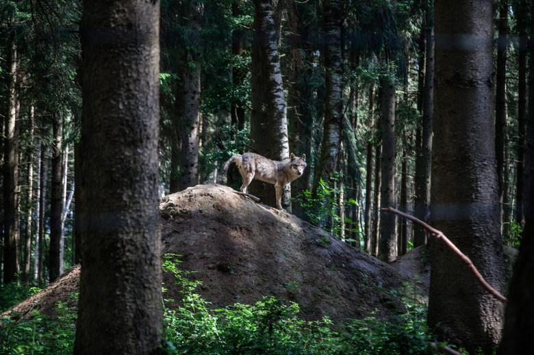 Poing, Natural park, Munich
