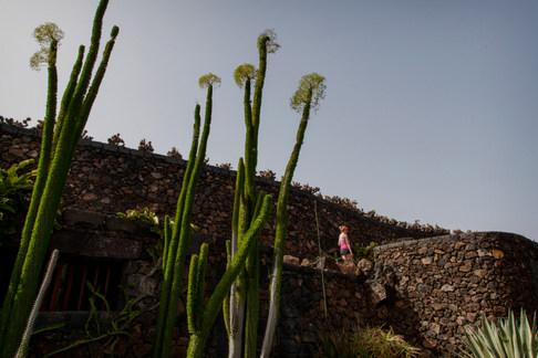 Jardin de Cactus. Lanzarote, Canarie
