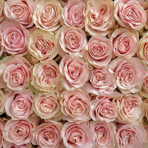 pink mondial.jpg