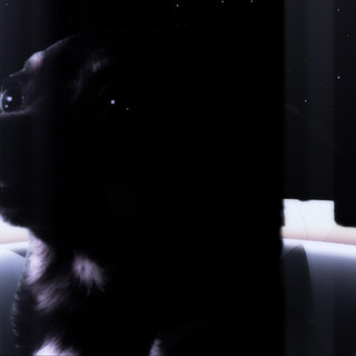 Chihuahua in a spaceship