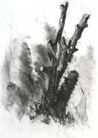 Beautiful early spring evening, Wilderness - A3 charcoal