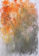 Autumn London Plane Tree A3 pastel on paper