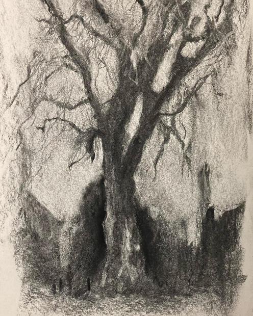 London Plane Tree, Early Winter Charcoal