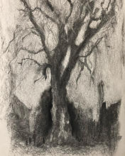 London Plane Tree, Early Winter Charcoal