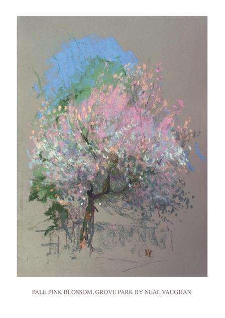 Pale Pink Blossom
