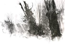 Evening Sun Wilderness Island - A3 charcoal