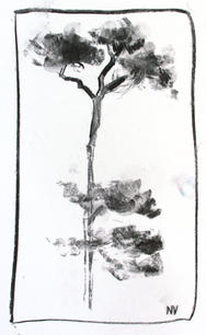 Oaks Park Tree, late Spring - A4 charcoal