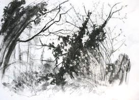 Early spring evening, Wilderness Island. A3 charcoal