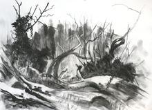 Late Winter, Wilderness Island Carshalto