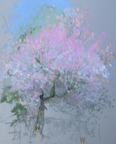Blossoms and light, Grove Park A4 pastel
