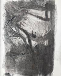 Herons Nesting, Carshalton Ponds