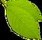 ג'וס פלאס - אתר לא רשמי אבל מאד מפורט