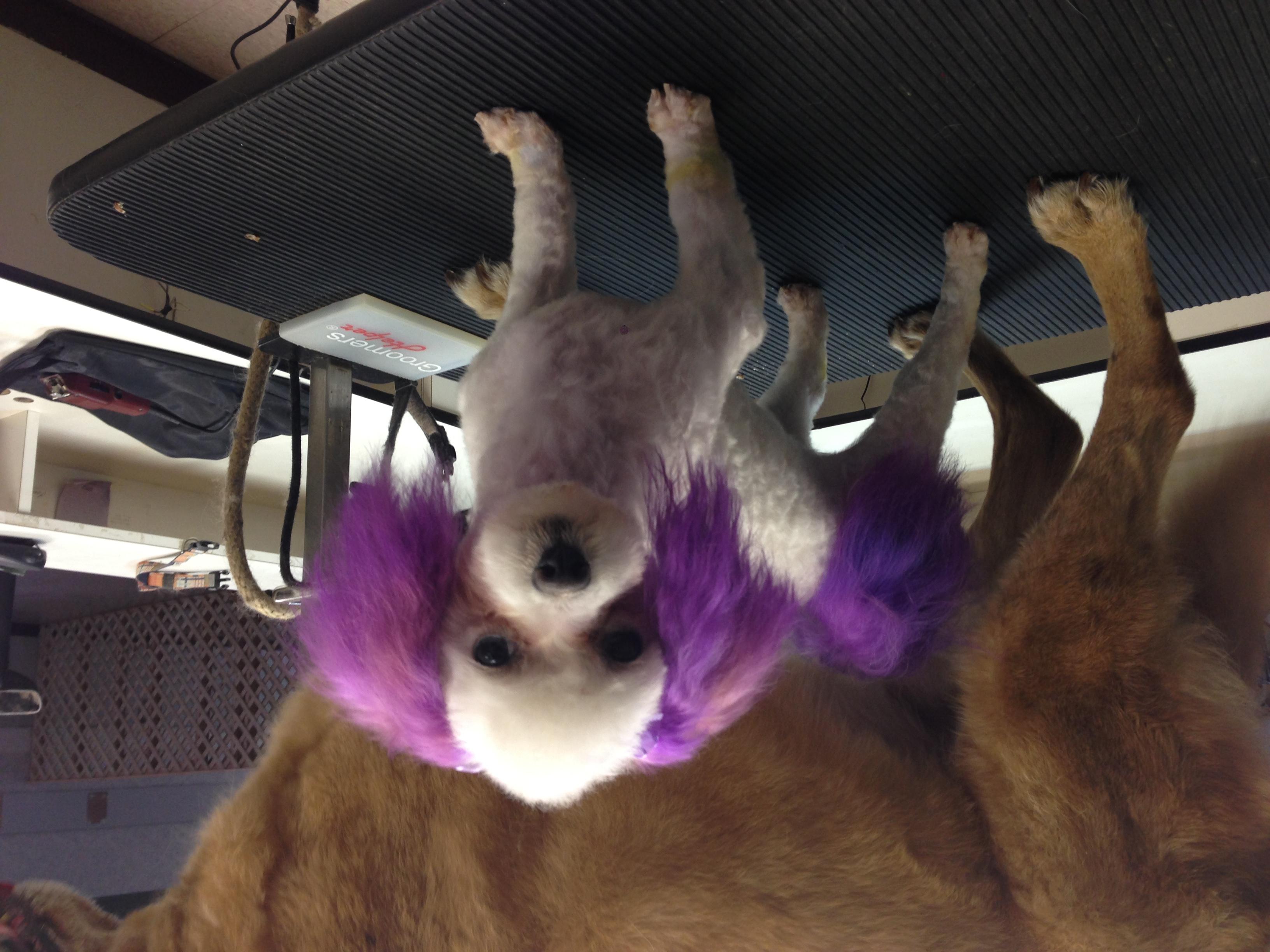 Success -Purple Hair Dye!