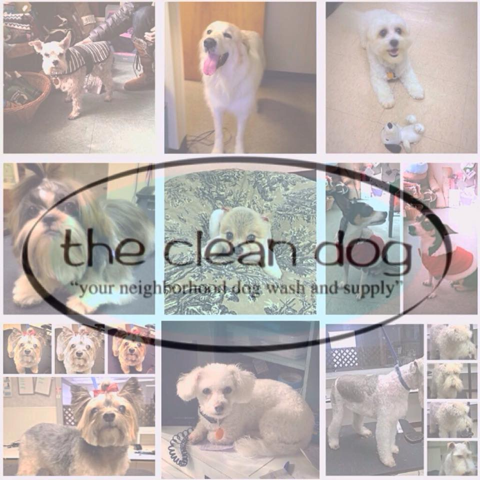Thecleandoginc solutioingenieria Image collections