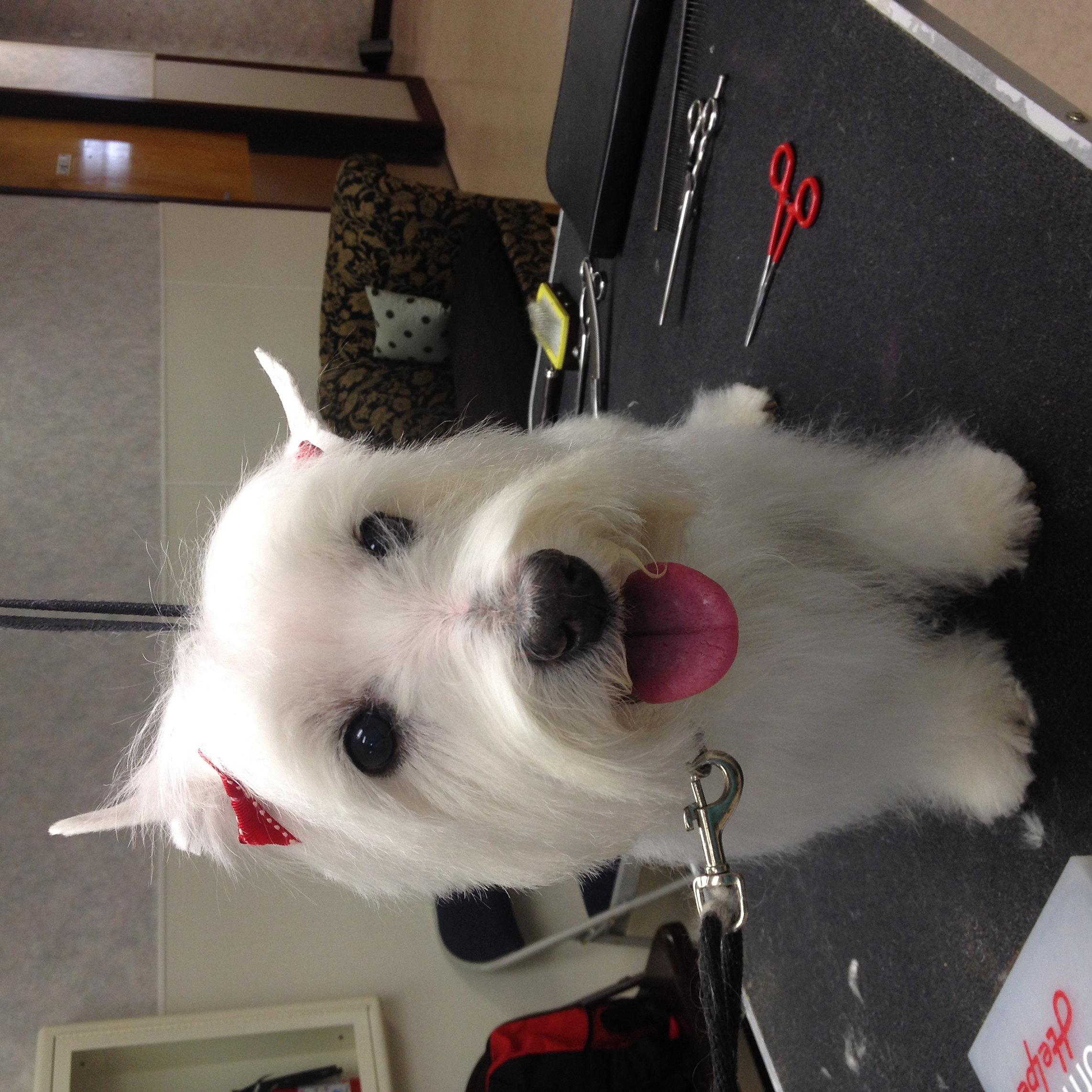 Mysite terrier solutioingenieria Gallery
